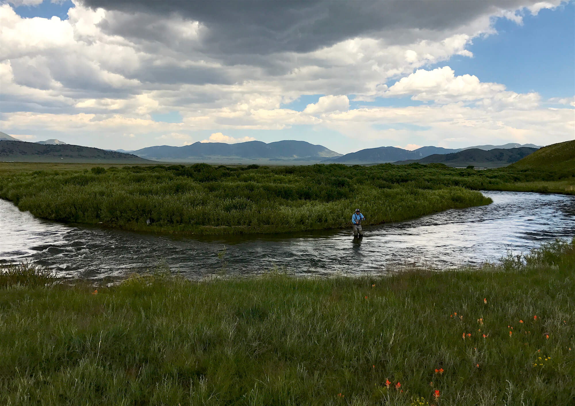 A fisherman wades into the South Platte with the Rocky Mountains in the background.