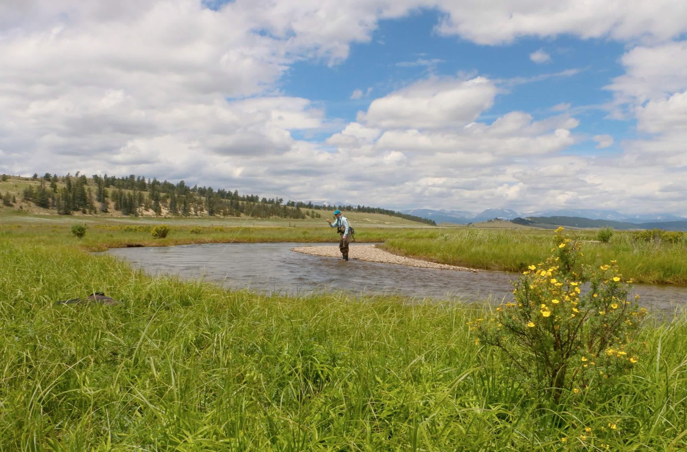 A fisherman casts his line in a gorgeous meadow on a Colorado summer day.